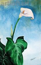 Calla Lily  FLOWER Art  Print by A Borcuk