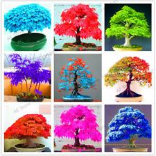 20 Pcs Seeds Mini Mixed Colors Japanese Maple Tree Flores Bonsai Plants Garden B