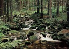 VLIES Fototapete-WALD BACH-(302V)-Bäume Natur Fluss Pflanzen Steine Wasserfall