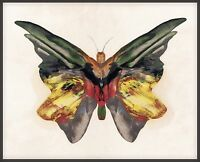 "Albert Bierstadt, 1890 - BUTTERFLY, antique decor, 20""x16"" Art Print"
