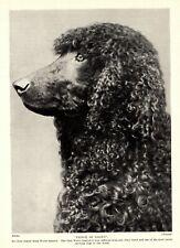 1930s Antique Irish Water Spaniel Dog Print Champion Prince of Liliwy 3430-Ff