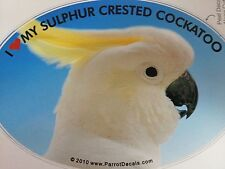Sulphur Crested Cockatoo Parrot Exotic Bird Vinyl Decal Bumper Sticker