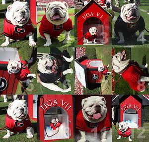 Georgia Bulldogs UGA dog mascot NCAA College Football Photo CHOICES 8x10-30x40