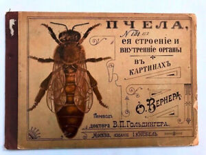 1905 ПЧЕЛЫ ее Строение и Внутренние Органы- Отто Вернер; BEES O. Werner- RUSSIAN
