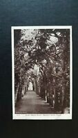Queen Mary's Bower, Hampton Court Palace G.P. Postcard