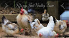 6++ SERAMA eggs This includes Smooth-Frizzled-Silken feathered hatching eggs!!