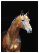 Akhal Teke gold light bay horse greeting card