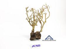 Aquarium Mini Bonsai Driftwood Moss Tree Shrimp Fish Aqua Ornament - AC765