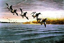 "BILLS VISIT LONG POINT 1995 WI Ducks Unlimited ""Bluebills"" Print by Les Kouba"