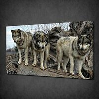 GREY WOLVES WATAHA CANVAS WALL ART PRINT PICTURE POSTER READY TO HANG
