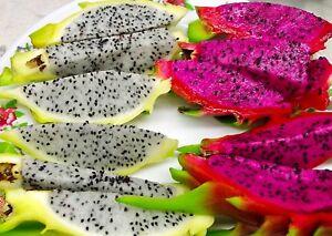 30+ Mixed  Dwarf Pitaya Dragon Fruit Viable Seeds Cactus succulent + Free Gift !