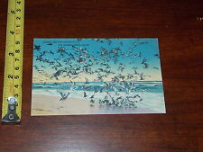 POSTCARD OLD DINNER TIME FOR THE SEA GULLS OLD ORCHARD BEACH MAINE