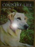 VINTAGE COUNTRY LIFE MAGAZINE FEBRUARY 16th 1961 IDEAL BIRTHDAY GIFT - LABRADOR