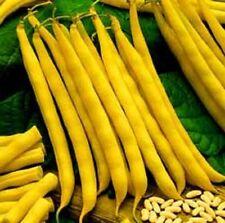 Vegetable Seeds - Yellow CHEROKEE WAX BEAN 5 Seeds