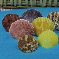 Lot of 20 Multi-colors Scallop Fan Shells Seashells Fish Tank DIY Crafts Decor