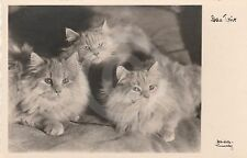 "RPPC of THREE CATS ""The Three"" CAT Postcard REAL PHOTO Photograph"