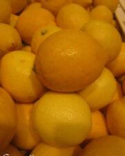Plantes, graines et bulbes limons moyens