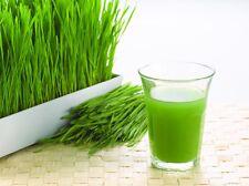 Organico Naturale Wheatgrass SEMI Home grown fresco succo inquadrature PULIZIA Detox 1kg