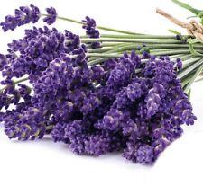 Lavendel Lavendula Echter mehrjährig Höhe 30-50 cm Samen