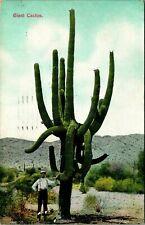 Postcard Arizona Man Standing Next To Giant Cactus c.1909