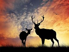 Art print poster foto Cervi SILHOUETTE TRAMONTO CIELO Stag lfmp0192