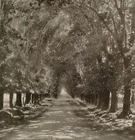 1899 Aufdruck Colonial South Afrika NEWLAND'S Allee Umhang Halbinsel Eiche Bäume
