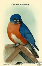 EASTERN BLUEBIRD, CHURCH & DWIGHT CO., INC. USEFUL BIRDS OF AMERICA