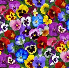Lovely Pansies Flowerbed Favourites Elizabeth's Studio Fabric 1/2 Yard