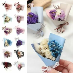 Backdrop Decor Press Mini Decorative Natural Dried Flowers Real Happy Flower