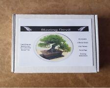 Bonsai Tree Kit Personalised Pine grow your own tree gift set starter kit