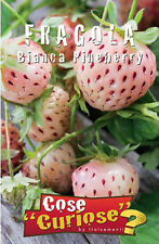 30 Semi/Seeds FRAGOLA Bianca Pineberry