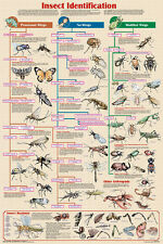 Insect Identification Laminated Educational Science Arthropod Chart Poster 24x36
