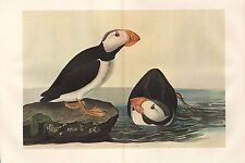 VINTAGE JOHN JAMES AUDUBON BIRD DOUBLE PAGE PRINT ~ HORNED PUFFIN