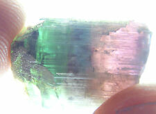 Q-118 watermelon tourmaline rough 33.98ct 14x20mm Brazil,bicolor, terminated,red