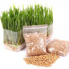 800Pcs/Set Cat Grass Seeds Oats Antioxidant Pets Health