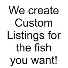 A special listing for another African Cichlid lover,  maxhunter616