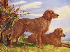 GOLDEN RETRIEVER DOGS OLD 1935 DOG COLOUR ART PRINT  BY SCOTT LANGLEY