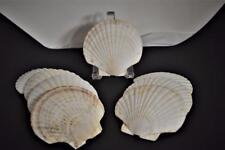 VINTAGE EIGHT 8 NATURAL CLAM SHELL SCALLOP OYSTER APPETIZER SERVING DISHES