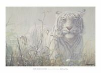 Monsoon White Tiger (detail) John Seerey-Lester Art Print Wildlife Poster 26x36