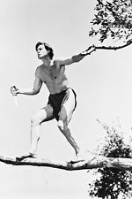 Johnny Weissmuller As Tarzan Tarzan And His Mate 11x17 Poster On Tree Branch