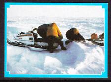 Weet-Bix Antarctic Advanture Card No 12
