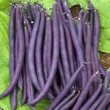 Bean  Purple King 250 seeds - BULK