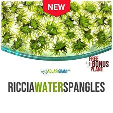 20+ Riccia Water Spangles (+Free Bonus Plant) Live Aquarium Floating Plant