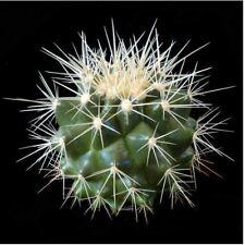 Fleur - Cactus - Echinocactus Grusonii Tonneau - 25 Graines