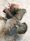Alaskan spruce grouse pheasant taxidermy bird art