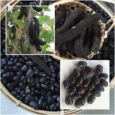 Mucuna pruriens 20 Seeds, Velvet bean, Unique Rare, Tropical Seeds From Thailand