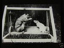 Glass Magic Lantern Slide A WHITE RAT & SQUIRREL ON A SWING C1910