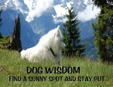 METAL REFRIGERATOR MAGNET Dog Wisdom Find Sunny Spot Stay Put Humor