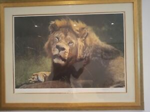 'Punchy' by Anthony Gibbs limited edition signed by artist