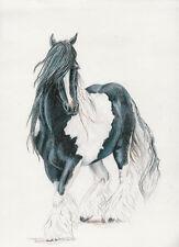 """""""Romany Raklo"""" (Gypsy Boy) Gypsy Vanner~  Cob ~Horse ~Stallion 8X10"""